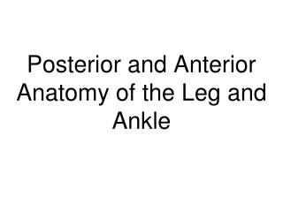 Posterior and Anterior Anatomy of the Leg and Ankle