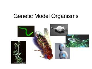 Genetic Model Organisms