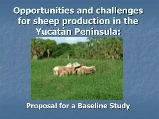 Opportunities and challenges for sheep production in the Yucatán Peninsula: