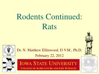 Rodents Continued: Rats