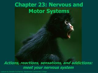 Chapter 23: Nervous and Motor Systems
