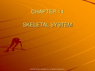 CHAPTER 14 SKELETAL SYSTEM