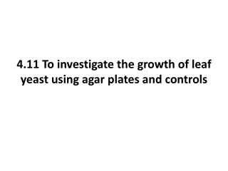 4.11 To investigate the growth of leaf yeast using agar plates and controls