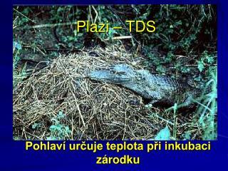 Plazi – TDS