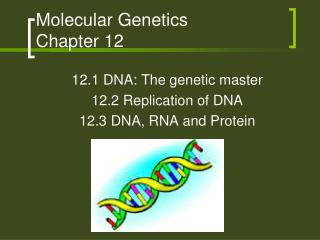 Molecular Genetics  Chapter 12