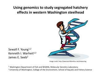 Using genomics to  study segregated hatchery  effects in western Washington steelhead