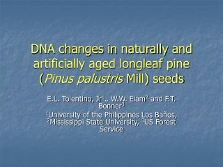 DNA changes in naturally and artificially aged longleaf pine ( Pinus palustris  Mill) seeds