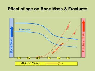 Effect of age on Bone Mass & Fractures
