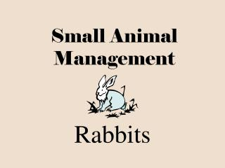 Small Animal Management