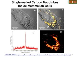Single-walled Carbon Nanotubes Inside Mammalian Cells