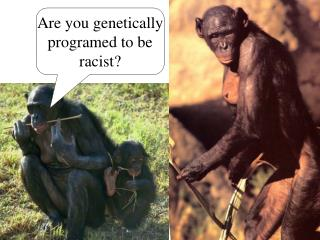 Are you genetically programed to be racist?