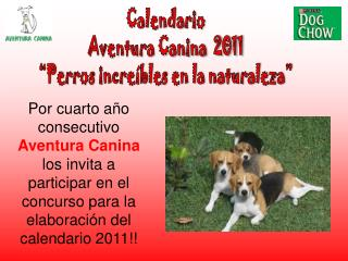 Calendario  Aventura Canina  2011  Perros incre bles en la naturaleza