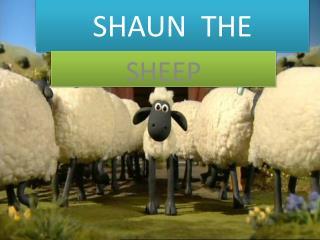 SHAUN  THE