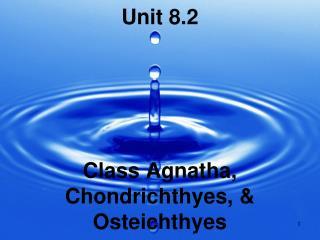 Unit 8.2 Class Agnatha, Chondrichthyes, & Osteichthyes