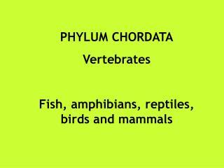 PHYLUM CHORDATA Vertebrates Fish, amphibians, reptiles, birds and mammals