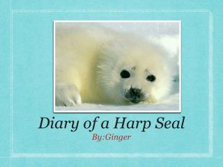 Diary of a Harp Seal