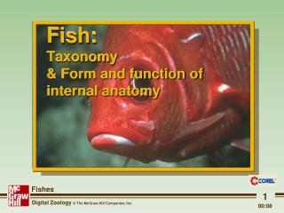 Fish: Taxonomy & Form and function of internal anatomy