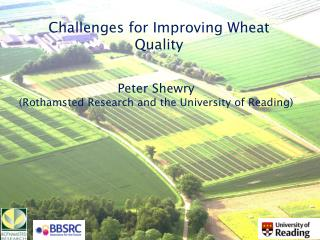 Challenges for Improving Wheat Quality