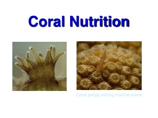 Coral Nutrition