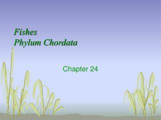 Fishes Phylum Chordata