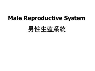 Male Reproductive System  男性生殖系统