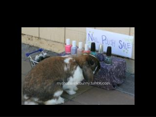 My rabbit bought crimson red nails Monday