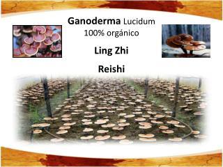 Ganoderma  Lucidum 100% orgánico  Ling Zhi Reishi