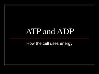 ATP and ADP