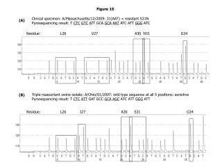 Clinical specimen: A/Massachusetts/12/2009: 31(AAT) = resistant S31N