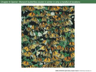 Chapter 8 Opener: Monarch butterflies cluster in winter in only a handful of locations