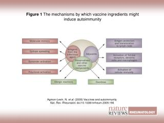 Figure 1  The mechanisms by which vaccine ingredients might induce autoimmunity