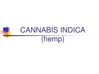 CANNABIS INDICA (hemp)