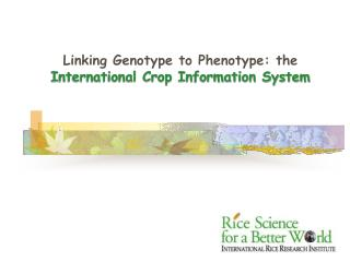 Linking Genotype to Phenotype: the  International Crop Information System