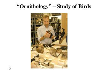 """Ornithology"" – Study of Birds"