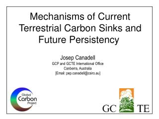 Mechanisms of Current Terrestrial Carbon Sinks and  Future Persistency