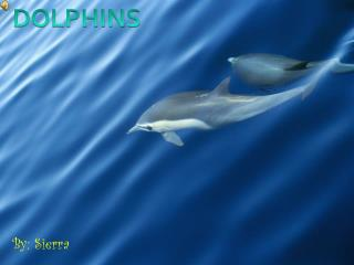 By: Sierra Dolphins live in places such as rivers in China ...