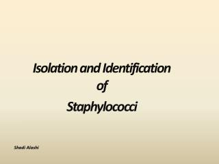 Isolation and Identification of   Staphylococci