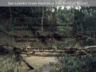 San Leandro Creek Hazardous Tree Removal Project