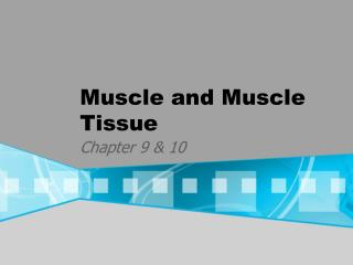 Muscle and Muscle Tissue