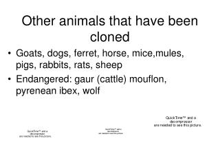 Other animals that have been cloned