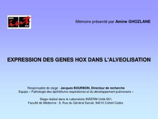 EXPRESSION DES GENES HOX DANS L'ALVEOLISATION