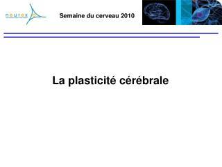 Semaine du cerveau 2010