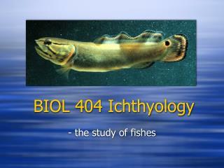 BIOL 404 Ichthyology