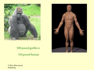 500 pound gorilla vs.  150 pound human