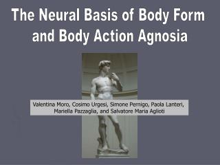 The Neural Basis of Body Form  and Body Action Agnosia