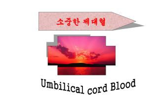 소중한 제대혈