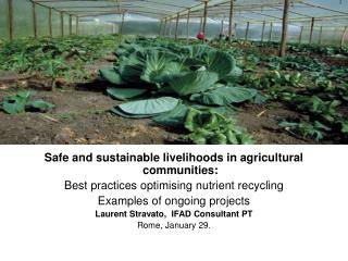 Safe and sustainable livelihoods in agricultural communities:
