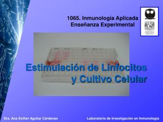 Estimulación de Linfocitos  y Cultivo Celular