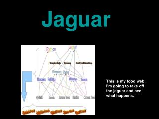 This is my food web. I�m going to take off the jaguar and see what happens.
