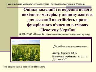 Автор: Орлата Ю.В.      Науковий керівник:  к. с.-г. н. Дупляк О.Т.